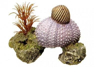 Akvárium dísz Tengeri kagyló növényekkel