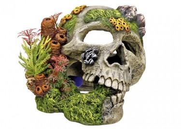 akváriumi dekor koponya növénnyel